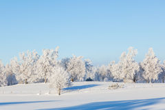 Winter landscape at a field Royalty Free Stock Photo