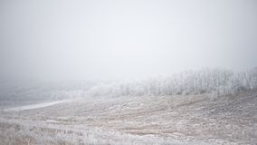 Winter Landscape with Field and Trees Covered with Frost and Snow in the Fog Stock Images