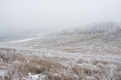 Winter Landscape with Field and Trees Covered with Frost and Snow in the Fog Stock Photography