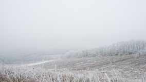 Winter Landscape with Field and Trees Covered with Frost and Snow in the Fog Royalty Free Stock Images