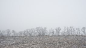 Winter Landscape with Field and Trees Covered with Frost and Snow in the Fog Royalty Free Stock Photos
