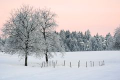 Winter landscape. A landscape with fields and trees under snow and frost in the winter Stock Image