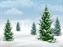 Winter landscape fir tree. Winter landscape with fir trees. Frosty day in a pine forest. Vector background Stock Photo