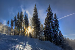 Winter landscape with fir trees forest covered by heavy snow in Postavaru mountain, Poiana Brasov resort, Stock Photography