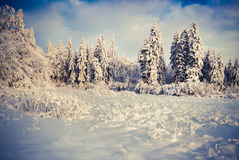 Winter landscape with fir-trees and fresh snow. Stock Photography