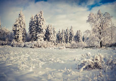 Winter landscape with fir-trees and fresh snow. Stock Photos