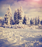 Winter landscape with fir-trees and fresh snow. Royalty Free Stock Images