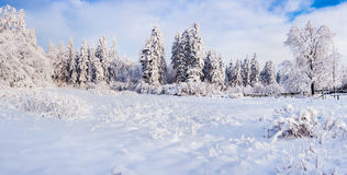 Winter landscape with fir-trees and fresh snow. Ukraine, Carpath Royalty Free Stock Image