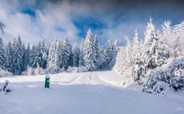 Winter landscape with fir-trees and fresh snow. Royalty Free Stock Photography