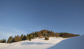 Winter landscape and fir trees Stock Image