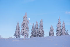 Winter landscape with fir trees in the snow and a beautiful moon Royalty Free Stock Images