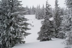 Winter landscape firs and bushes in the snow. Winter landscape majestic firs covered with snow, picturesque nature, freeride track Royalty Free Stock Photo
