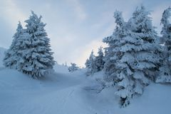 Winter landscape firs and bushes in the snow. Winter landscape majestic firs covered with snow, picturesque nature, freeride track Stock Photo