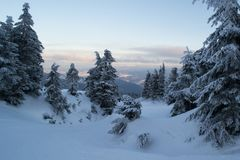 Winter landscape firs and bushes in the snow. Winter landscape majestic firs covered with snow, picturesque nature, freeride track Royalty Free Stock Images