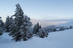 Winter landscape firs and bushes in the snow. Winter landscape majestic firs covered with snow, picturesque nature, freeride track Royalty Free Stock Image