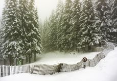 Winter landscape of firs forest covered in snow - Vosges, France stock photo