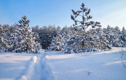 Winter landscape with firs and road. Royalty Free Stock Images