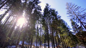 Winter landscape with firs and stream on a sunny day stock footage