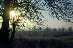 Winter landscape of the first frost, frost on the trees, the bra Stock Photo
