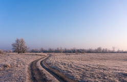 Winter landscape of the first frost, frost on trees, morning sun Royalty Free Stock Image