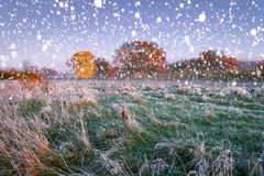 Winter landscape with first snowflakes on frosty meadow in November. Scenery snowy autumn at early morning. Stock Image
