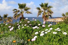 Winter landscape with flowers on the beach, Paphos, Cyprus. Stock Photo