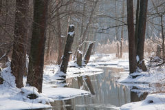 Winter landscape of flowing river in sunny day Stock Photography