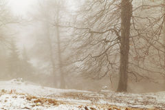 Winter landscape of the foggy forest Stock Image
