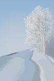 Winter landscape. Foggy orning, trees with snow Stock Images