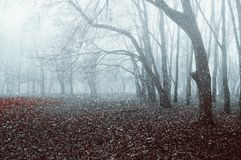 Winter landscape. Foggy park with snow falling on the dry autumn leaves. Beginning of the winter season Stock Image