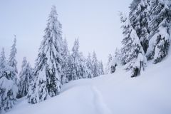 Winter landscape with footpath in the snow. Winter forest in snow. Mountain landscape with a footpath. Frosty weather Royalty Free Stock Images