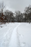 Winter landscape. Footpath in a snowy winter forest Stock Images
