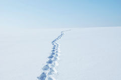 Winter landscape with footprints running to horizon along the snow field Royalty Free Stock Photography