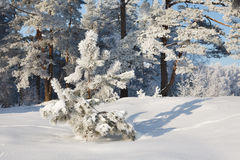 Winter landscape in forest Stock Image