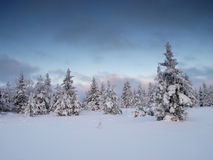 Winter landscape by forest Royalty Free Stock Image