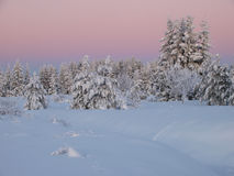 Winter landscape by forest Stock Photo