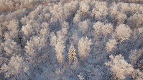 Winter landscape with forest. stock footage