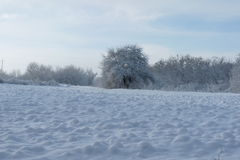 Winter landscape. Winter forest against the blue sky Stock Photo