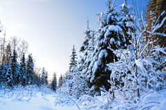 Winter landscape with the forest Stock Image