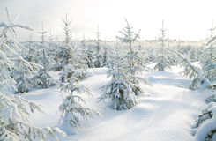 Winter landscape with the forest Stock Images