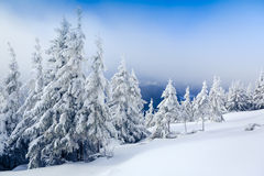Winter landscape in the forest Royalty Free Stock Photos