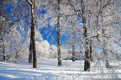 Winter landscape with the forest Royalty Free Stock Photo
