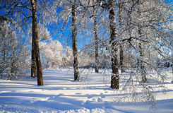 Winter landscape with the forest Royalty Free Stock Image
