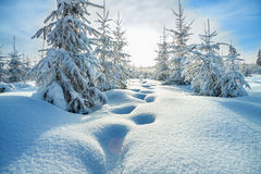 Winter landscape with the forest  and blue sky Stock Photo