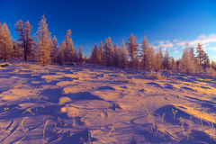 Winter landscape with forest, cloudy sky and sun and halo. Winter day landscape with taiga, cliffs and clouds on the blue sky and sun and halo Stock Images