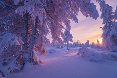 Winter landscape with forest, cloudy sky and sun. Winter landscape with forest, cloudy sky, trees and sun. Pink and violet tone Stock Photo