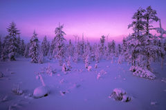 Winter landscape with forest, cloudy sky and sun. Winter landscape with forest, cloudy sky, trees and sun. Pink and violet tone Stock Photos