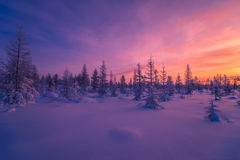 Winter landscape with forest, cloudy sky and sun. Winter landscape with forest, cloudy sky, trees, snow and sun. Pink and violet tone Stock Image
