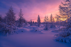 Winter landscape with forest, cloudy sky and sun. Winter landscape with forest, cloudy sky, trees, snow and sun. Pink and violet tone Stock Photo