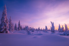 Winter landscape with forest, cloudy sky and sun. Winter landscape with forest, cloudy sky, trees, snow and sun. Pink and violet tone Royalty Free Stock Photos